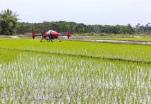 Drony w rolnictwie – jaką pełnią rolę